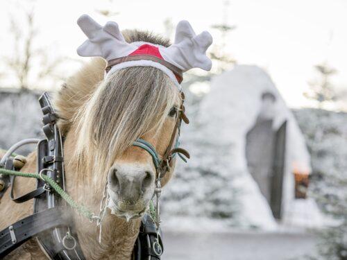 Kosta julmarknad bjuder på julkänsla fram till årsskiftet.