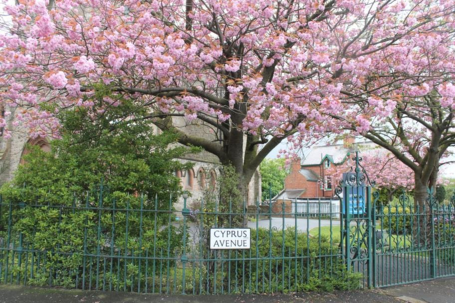 Träd nära Van Morrissons barndomshem.