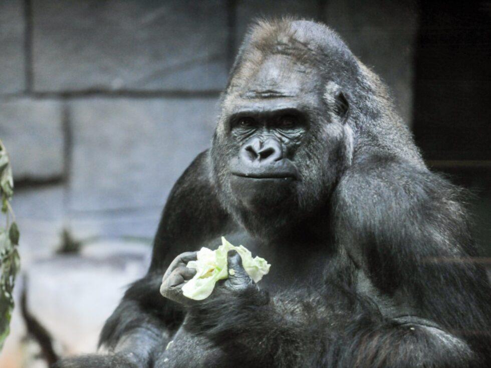 Djuren på zoo såg ledsna ut.
