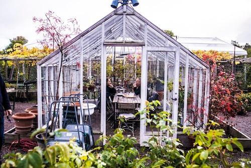 Fika i ett eget växthus på Rosendals trädgård.