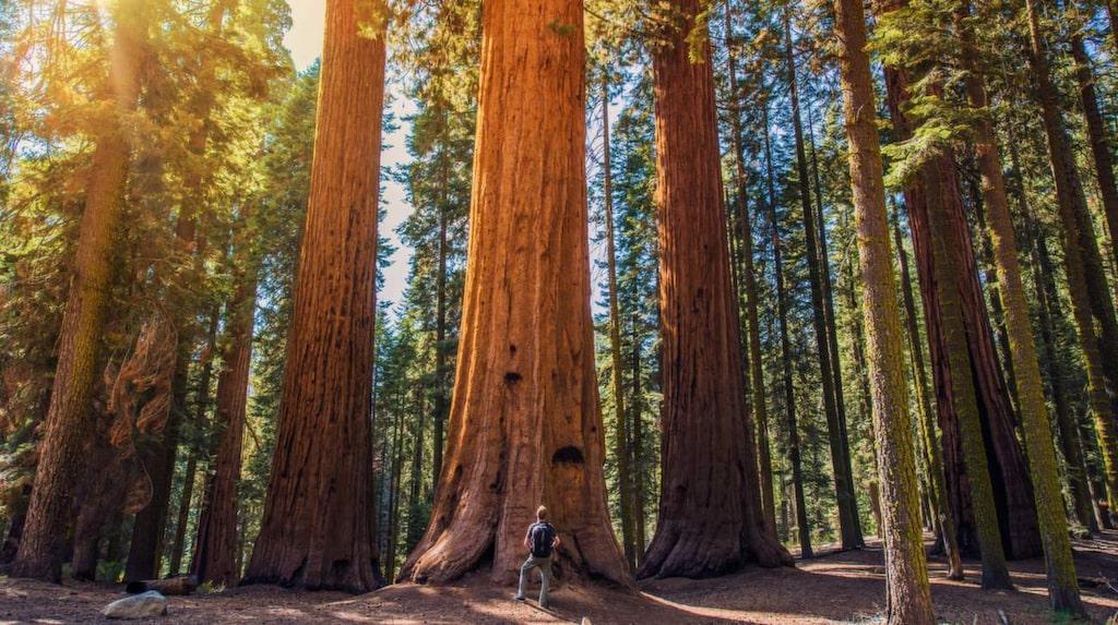 Sequoia National Park, Kalifornien.