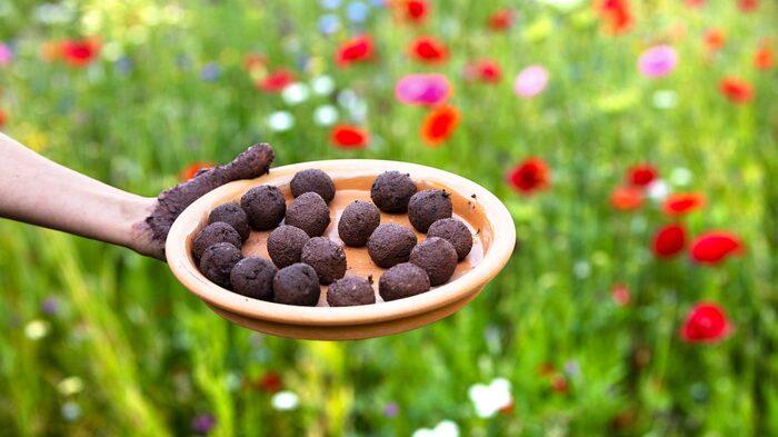 Rulla små bollar av lera, jord och frön...
