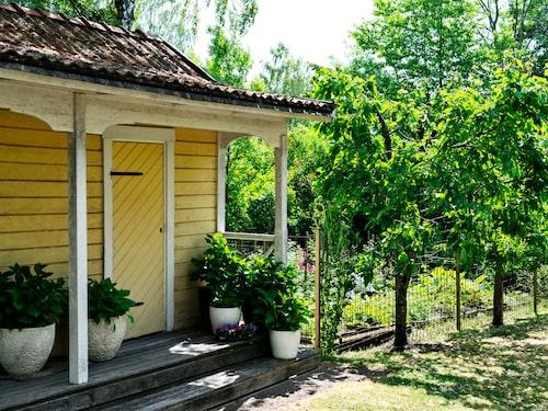 Ett rejält grönsaksland förser hushållet på Aspvik med färska bär och grönsaker.