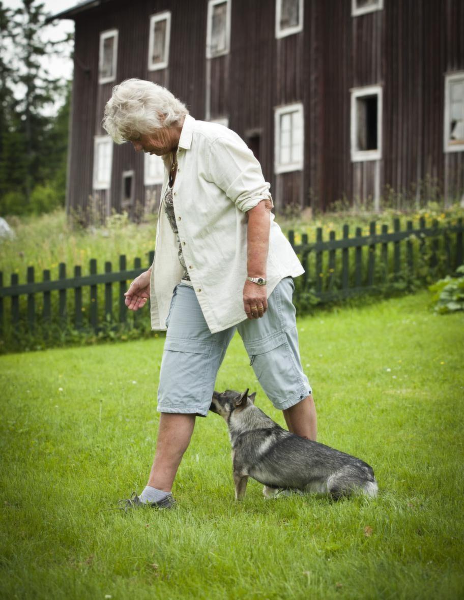 TRICK: KRYSSA MELLAN MATTES BENSteg 2: Växla höger & vänster. Markera  starten med att ställa dig och hunden i utgångsställning.  Använd nu  inget synligt lockbete och rör dig mer upprätt. Fortsätt att  belöna när  hunden gör rätt. Växla genom att ha höger respektive  vänster ben  närmast hunden.