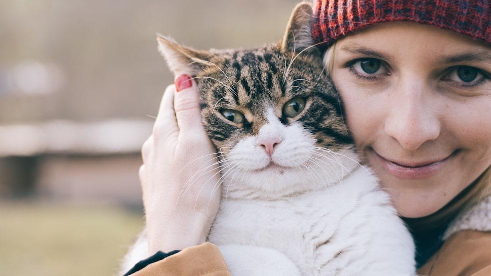 Man uppskattar att det finns 100 000 hemlösa katter i Sverige.