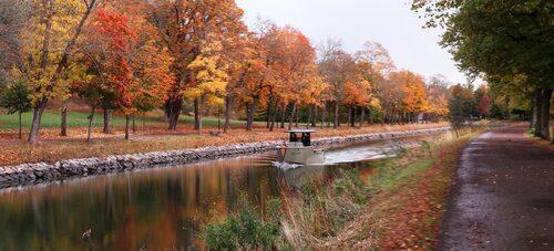 En elbåt smyger tyst fram på Djurgårdsbrunnskanalen, kantad av höstens färgprakt.