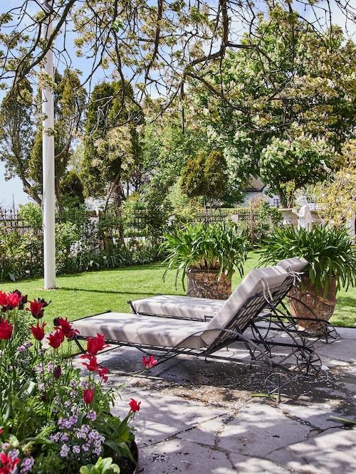 När Karl Fredrik och Petter är lediga tar de gärna igen sig i solen. I krukorna står Afrikas blå lilja. I förgrunden blommar röda tulpaner och papegojtulpaner.