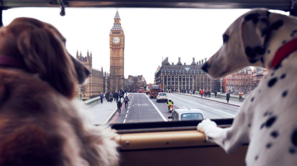 Bussen gör stopp vid några av stadens bästa parker för hundpromenader, hundvänliga restauranger och turistattraktioner med hundkopplingar.