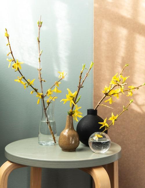 Små vaser i grupp blir ljuvligt vid sängkanten. Och vem vill inte vakna bredvid vårblomning? Ställ korta kvistar av forsythia i varmt vatten. Om du inte har en egen buske kanske ett par korta kvistar är okej att fråga någon forsythia-ägare om.