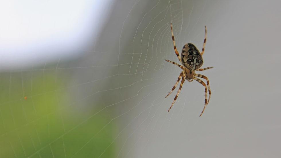 Det finns ett superknep för att slippa insekterna som vill in i ditt hem.