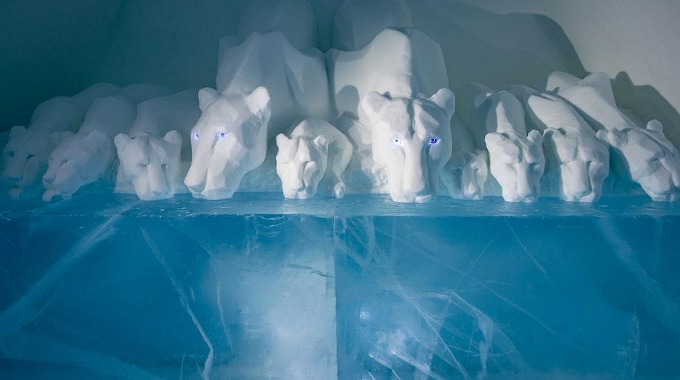 Kalla björnar i sviten Clear Water.