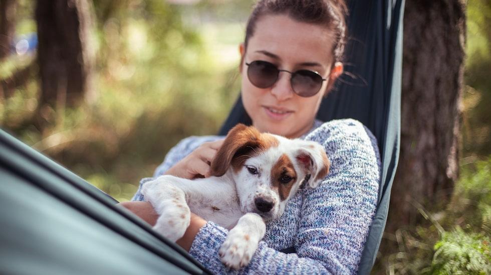Att skydda ditt husdjur är viktigt även för att skydda dig själv mot färstingbett och risken för fästingburna sjukdomar.