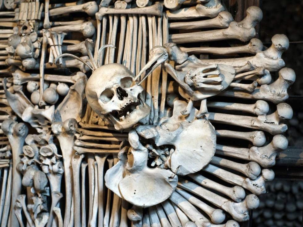 """Sedlec Ossuary. """"Benkyrkan"""" är en världsberömd skräckis."""