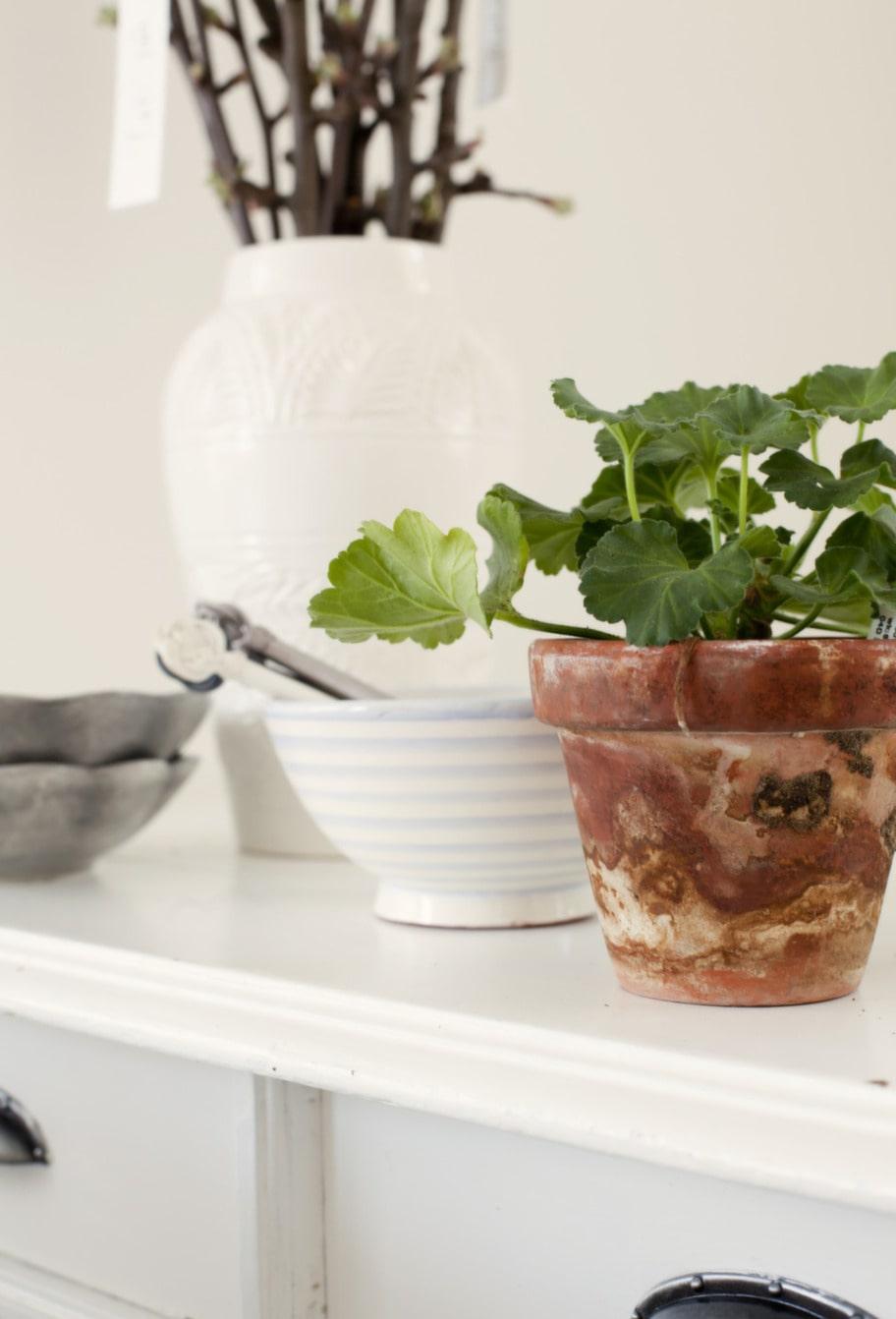 Grönt & skönt. Ett litet pelargonskott blir ett vackert blickfång tillsammans med den randiga skålen från Tine K.