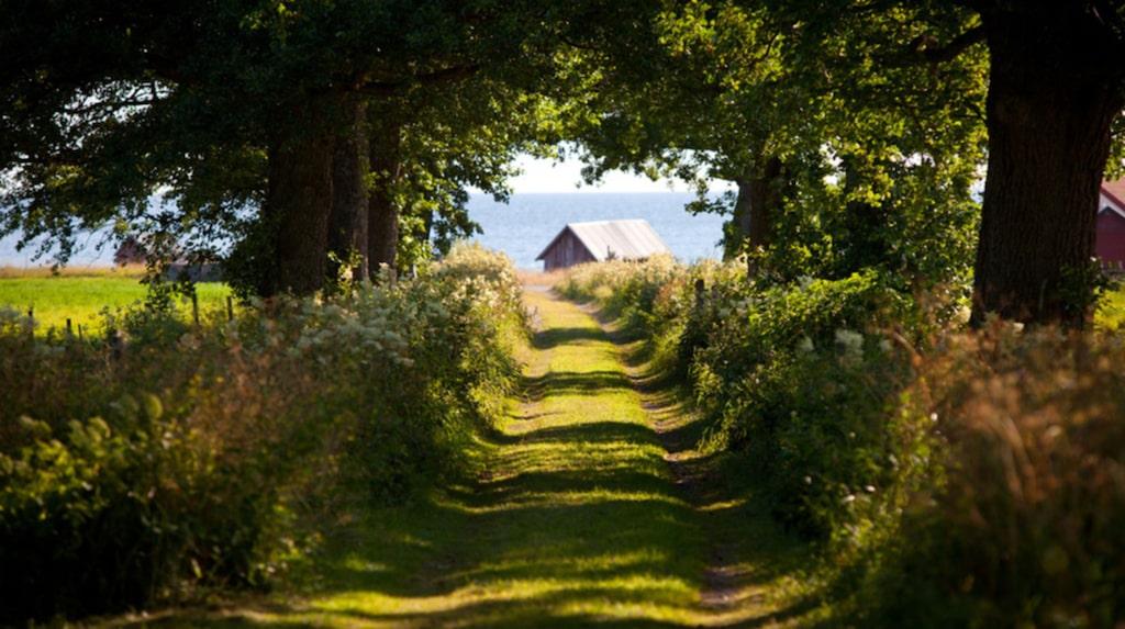 Det vackra landskapet på Gotland lockar många husköpare.