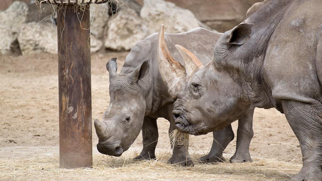 Klotterplank eller noshörningar?