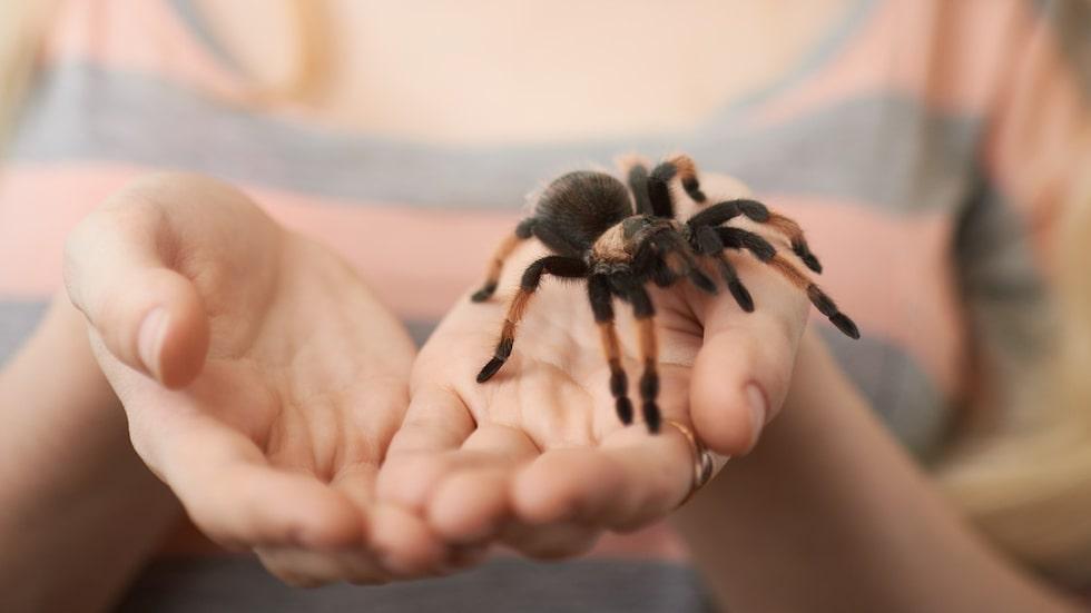 Tro inte att du är ensam i ditt hem. Spindlar, liksom många andra små kryp, är duktiga på att gömma sig, i golvspringor, under blomblad, i mattor...