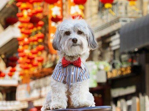 Buster är inte enda hotellanställda hunden.