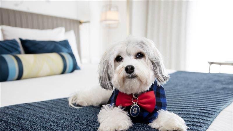 Buster är chef för hundverksamheten på det hundvänliga hotellet Nikko.
