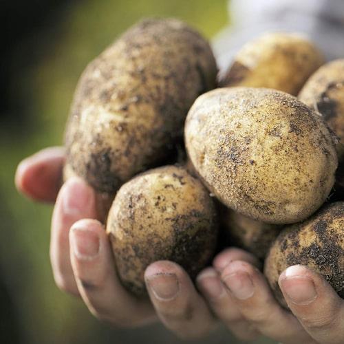 För högt GI? – ät dem utan skal. Dessutom håller potatis dig mätt länge.