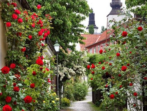 Upptäck vackra Visby till fots