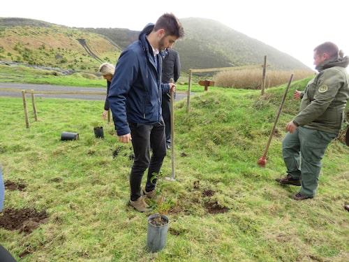 Duarte Silveira planterar det första trädet på Azorerna.