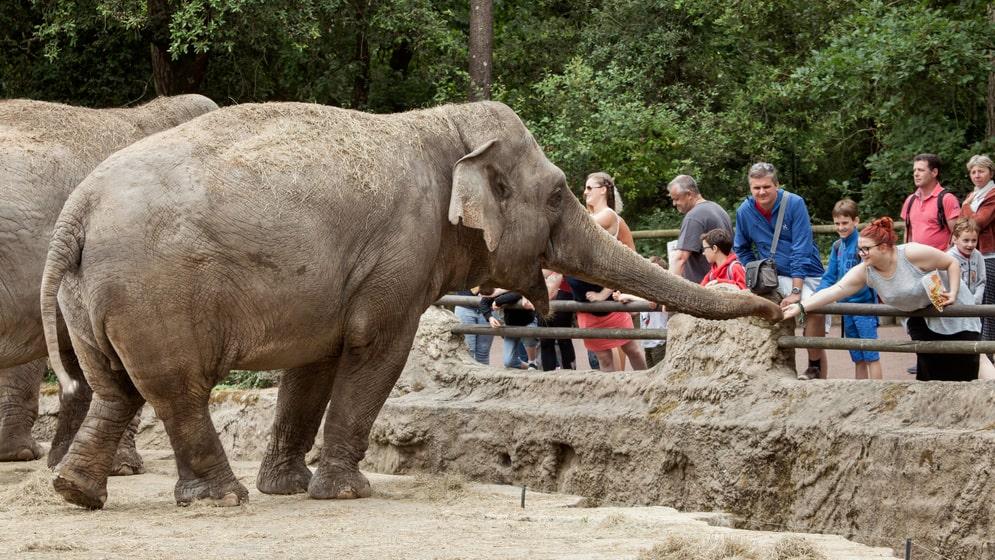 På djurparken La Palmyre i Frankrike finns 1 600 djur.