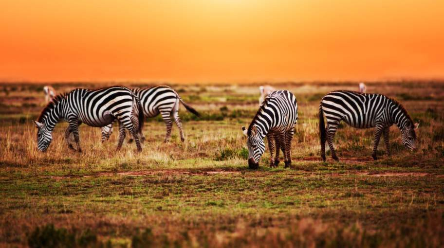 <p>Besök nationalparkerna i Sydafrika mellan maj och september.</p>
