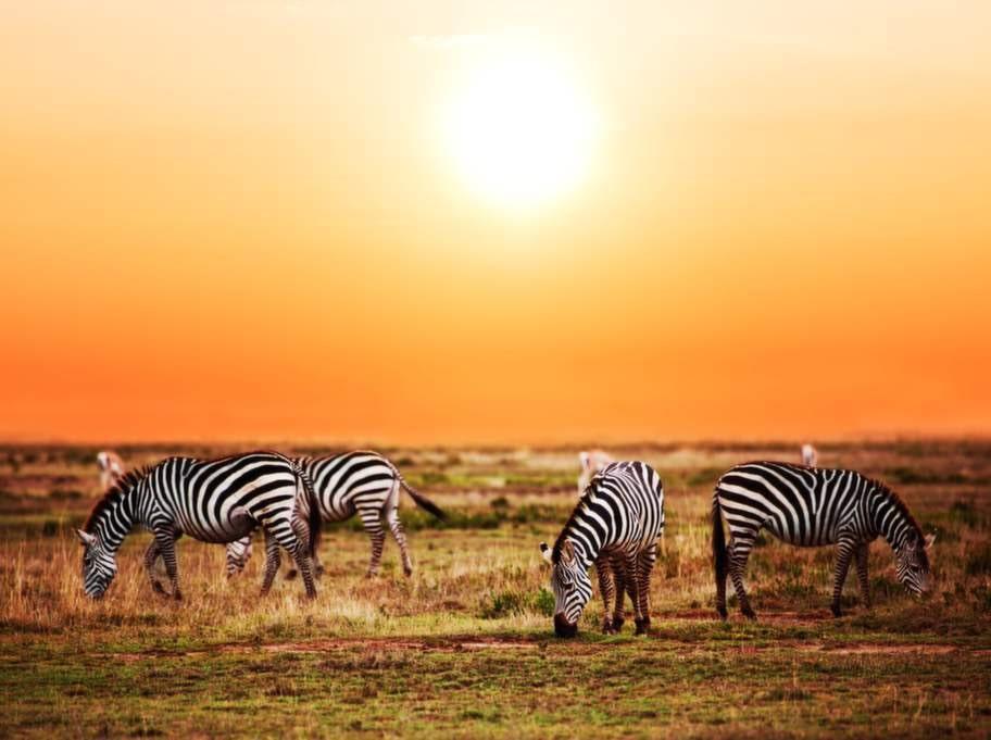 Besök nationalparkerna i Sydafrika mellan maj och september.