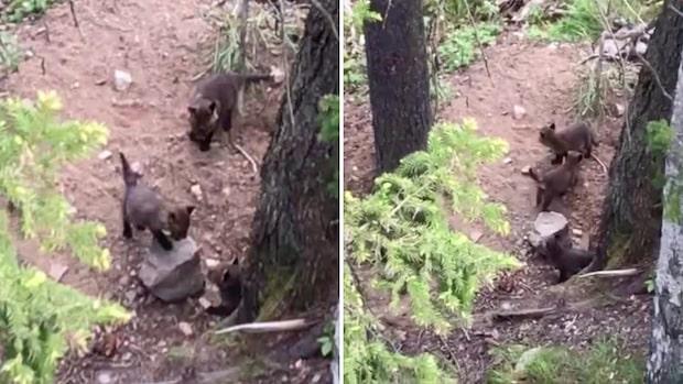 Dan & Lindas söta upptäckt i skogen