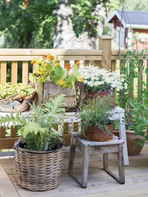 Paret älskar att ha en trädgård och har blommor både i rabatter och i krukor. Träpall, trälåda och korgar fick de med huset. Bänk, Ikea.