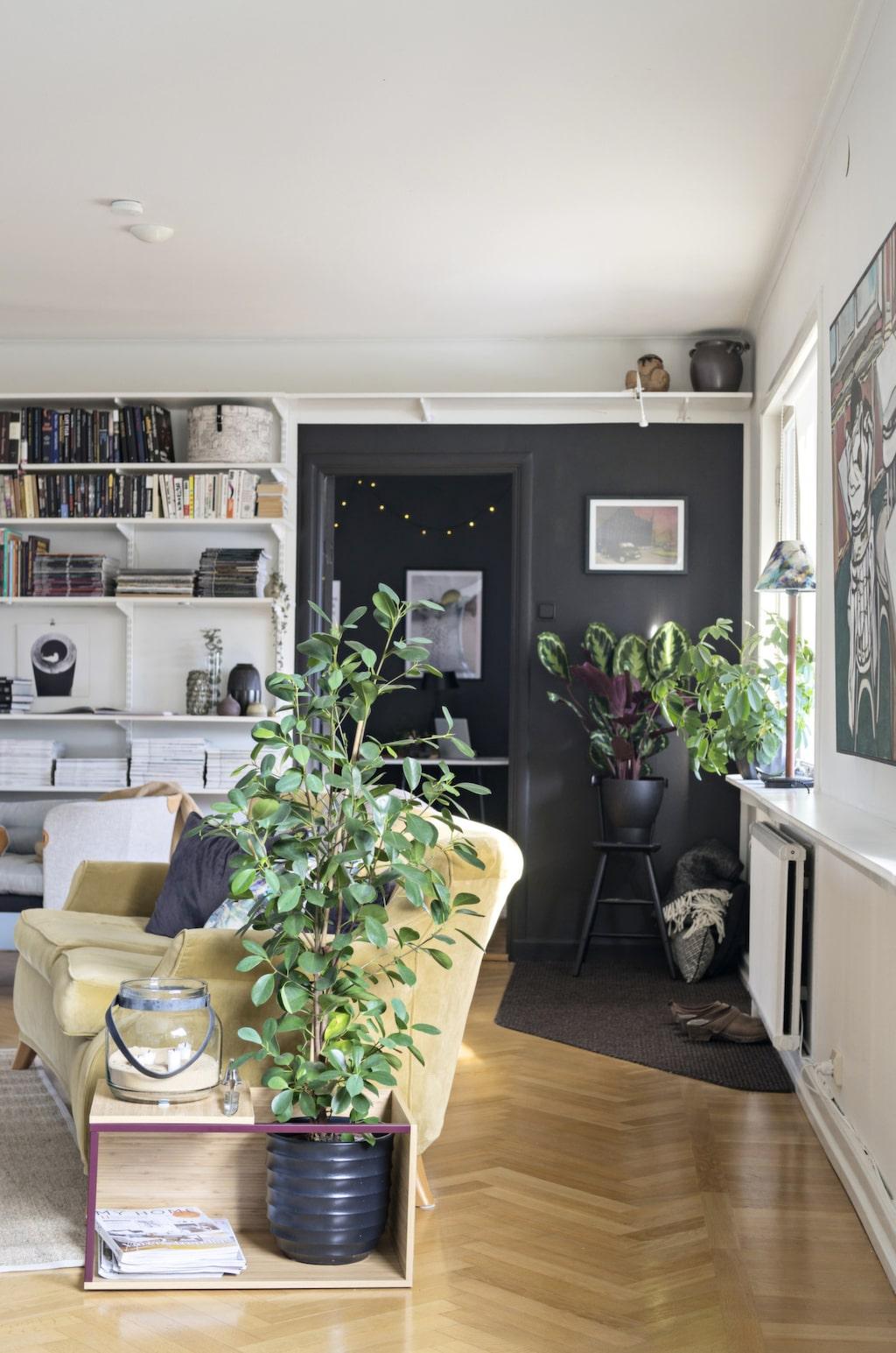 Svart och vitt i vardagsrummet mjukas upp med mycket gröna växter och en generös, gul sammetssoffa. Ljusslingor är effektfullt mot en svart vägg.