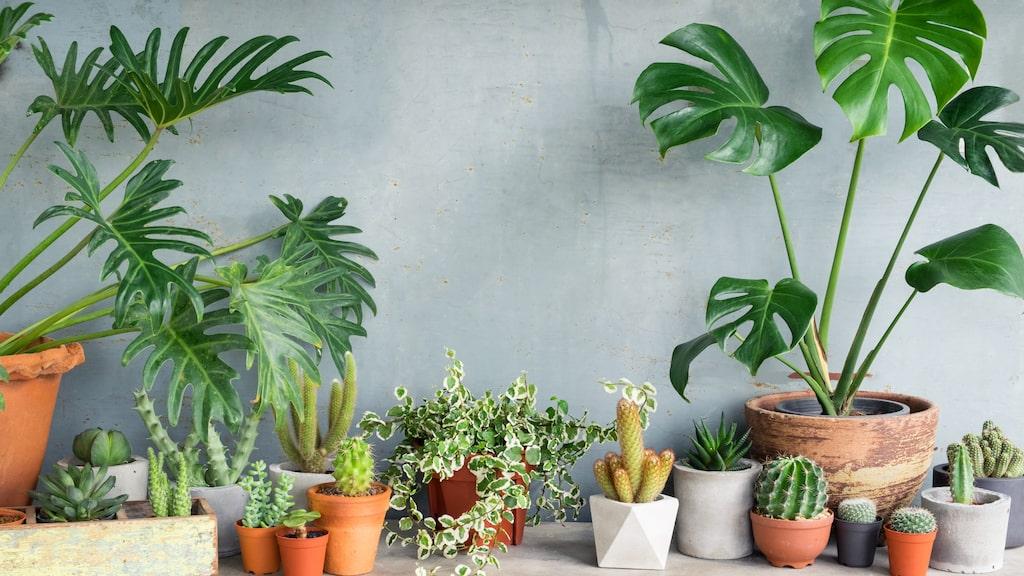 Fyll hemmet med växter och må bättre!