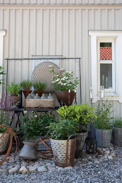 Carin älskar att uttrycka sig genom färg och form, här ett vackert stilleben. Krukorna kommer från hennes egen trädgårdsbutik.