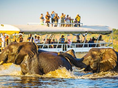 En båttur på Chobrefloden för att titta närmare på flodhästar, krokodiler och elefanter är ett måste.