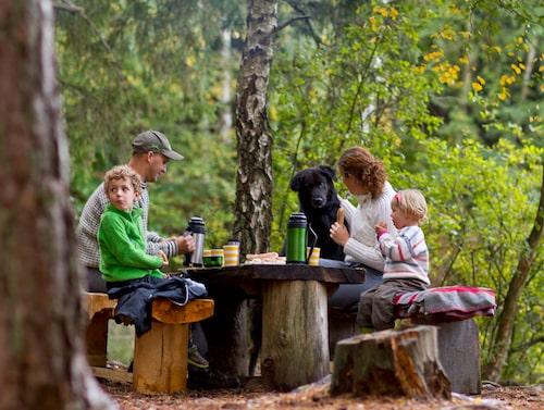 Torups bokskog – perfekt för en picknick.