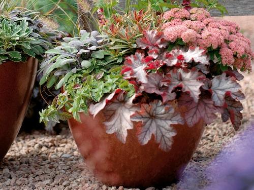 Proffsen har alltid planterat på hösten. Nu är det dags för oss andra. Stora planteringsveckan drar i gång i september!