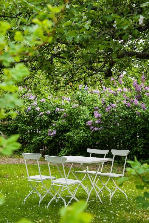 Flytta ut och sitt i grönskan! Varför inte under ett blommande fruktträd?