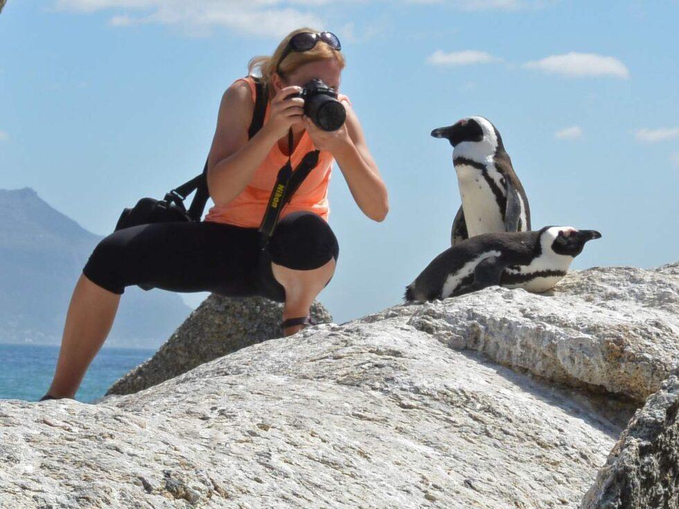 Pingviner i det vilda finns på närmare håll än Antarktis. I Boulders Beach vid Simon's Town kommer man dessa charmiga varelser riktigt nära.