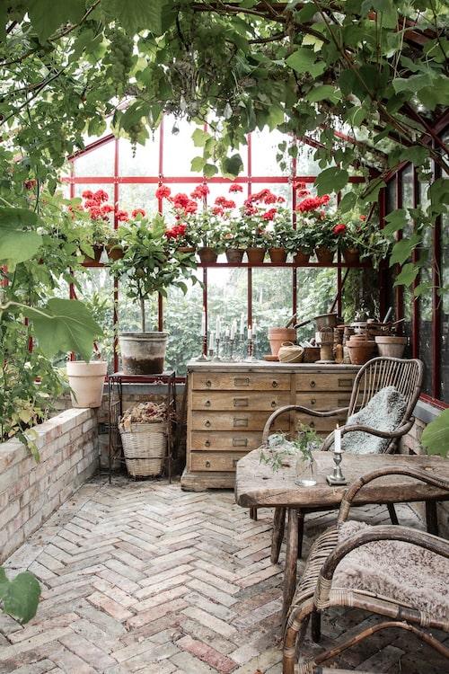 Växthuset har paret byggt själva. Golvet har Åsa lagt av begagnat tegel.