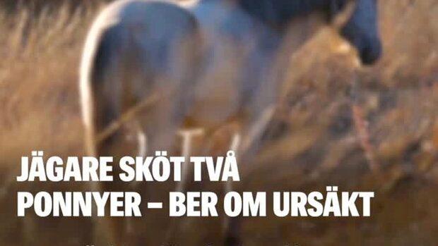 Jägare i Emmaboda sköt ponnyer –  trodde det var vildsvin