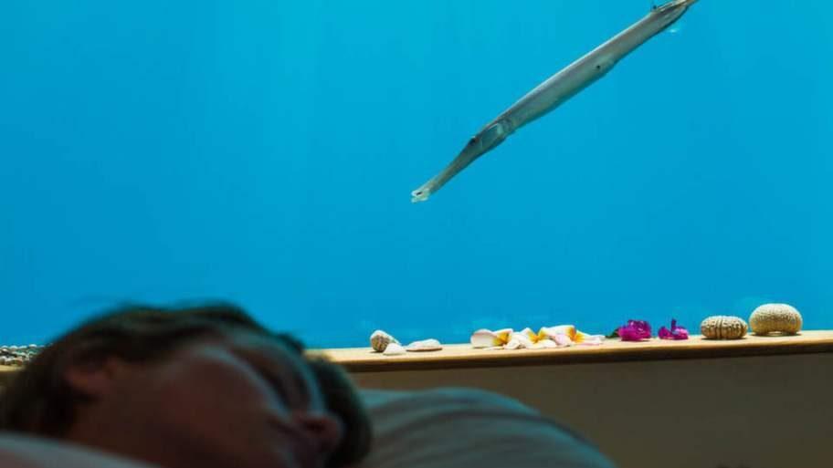 Här kan du beundra det exotiska fisklivet - exempelvis liggande i rummets stora deluxebädd.