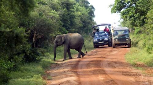 300 elefanter lever i Yala nationalpark.