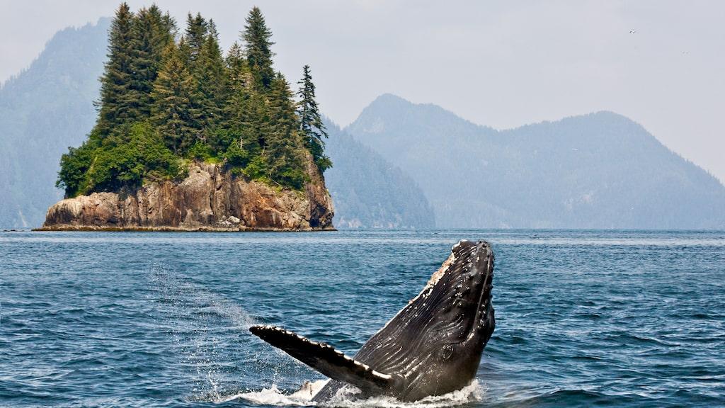 Det varmare klimatet hotar Alaskas rika djurliv.