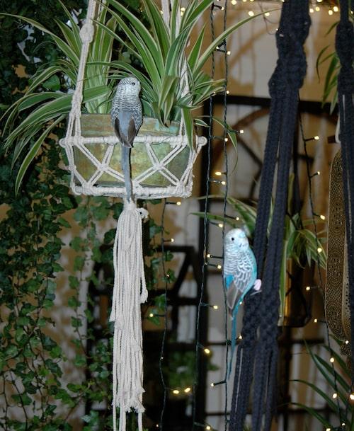Många av idéträdgårdarna på mässan var fyllda av hängande amplar med växter – och fåglar.