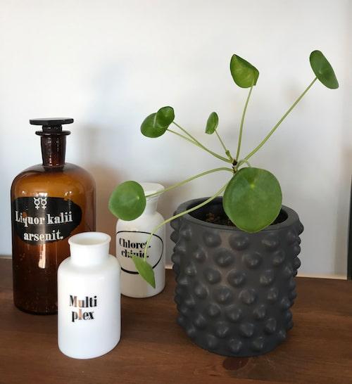 """Malin OIsson unnar sig fina blomkrukor hemma. Den knottriga krukan är designad av Hanna Wessman, som under tre år var inredare i """"Äntligen hemma"""" i TV4. Apotekskrusen bredvid har Malin fyndat på loppis."""