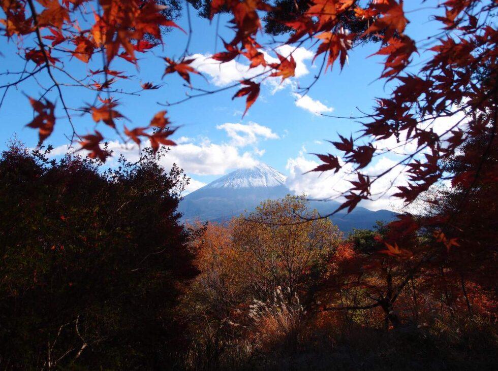 """Denna till synes rofyllda skog vid foten av berget Fuji har en extremt plågsam historia. Den är känd som """"självmordsskogen"""" FOTO: Guilhem Vellut/Flickr"""