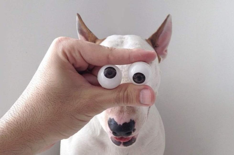 Inga typiska hundögon direkt.