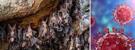 Corona-hoppet: Grottan i Thailand ska ge svaret