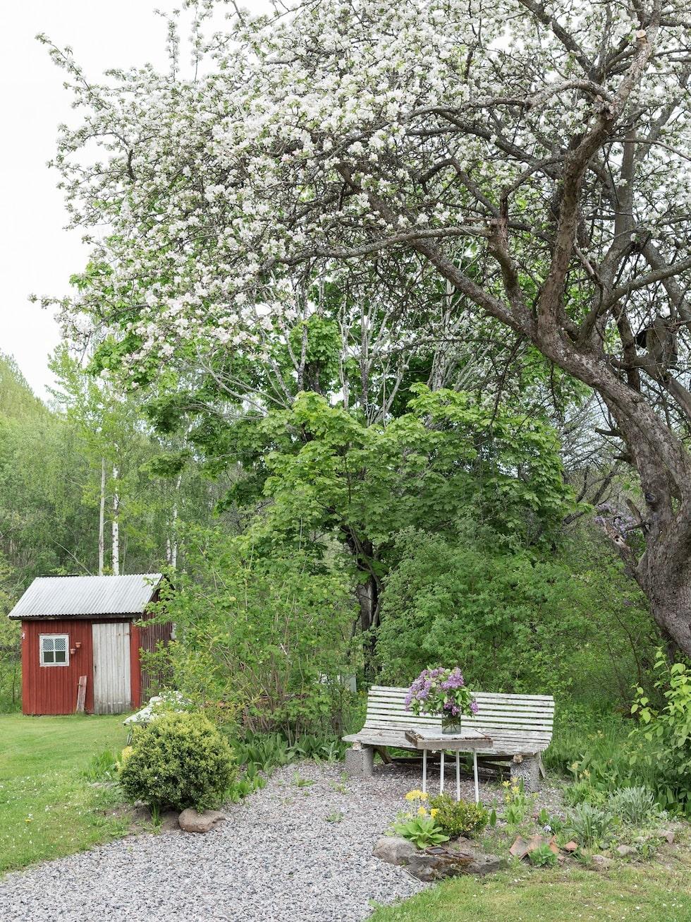 Det stora äppelträdet är från 1900-talets början.
